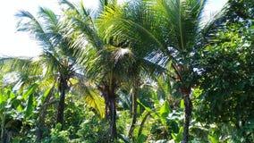 kokospalmen en banaanbomen op de rand van de weg stock foto's