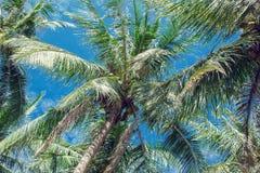 Kokospalmen en blauwe hemel met lichte wolken stock afbeelding