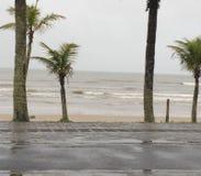 Kokospalmen en regenachtig strand stock foto's