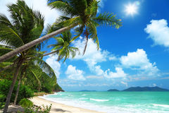 Kokospalmen en strand in Thailand Stock Fotografie