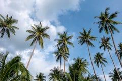 Kokospalmen met de hemel royalty-vrije stock fotografie
