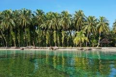 Kokospalmen met epiphytes en hut op overzeese kust Stock Afbeelding
