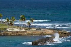 Kokospalmen naast het overzees Royalty-vrije Stock Foto