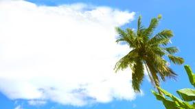 Kokospalmen och Coud har fritt utrymme för ditt ord Arkivbilder