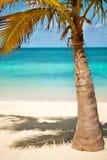 Kokospalmen onder blauwe Caraïbische hemel Stock Afbeelding