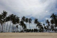 Kokospalmen op een zonnige dag Stock Afbeeldingen