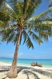 Kokospalmen op het strand Stock Afbeelding