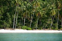 Kokospalmen op het strand Stock Foto's