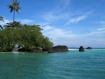 Kokospalmen op het strand Stock Foto