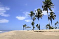 Kokospalmen op het strand Stock Afbeeldingen