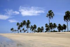 Kokospalmen op het strand Stock Fotografie