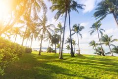 Kokospalmen op het strand royalty-vrije stock fotografie