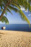 Kokospalmen op moorea 3 Stock Foto's