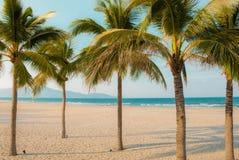 Kokospalmen op strand en overzees stock foto