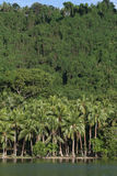Kokospalmen op wildernisstrand in Vanuatu Royalty-vrije Stock Afbeeldingen