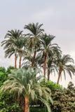Kokospalmen tegen de blauwe hemel, een mooie tropische achtergrond stock afbeelding