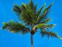 Kokospalmen tegen de hemel Royalty-vrije Stock Foto