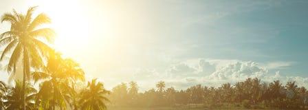 Kokospalmen tegen de hemel op een zonnige hete werktijd Royalty-vrije Stock Afbeeldingen