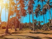 Kokospalmenaanplanting royalty-vrije stock afbeelding