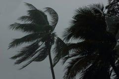 Kokospalmenboom tijdens zware wind of orkaan Regenachtige dag stock fotografie