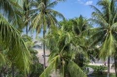 Kokospalmer Arkivbild