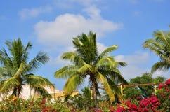 Kokospalmer Royaltyfri Fotografi