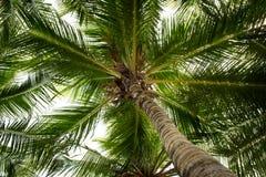 Kokospalmer Arkivbilder