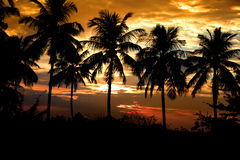 Kokospalmer Arkivfoton