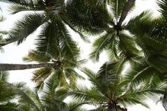 Kokospalmer royaltyfri foto
