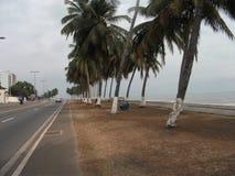 Kokospalmer - Gabon Arkivbilder