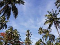 Kokospalmer med blå himmel arkivbilder