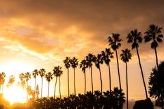 Kokospalmer med solljus på stranden i afton arkivfoton