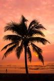 Kokospalmer med solnedgångbakgrund på stranden Arkivbild