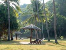 Kokospalmer och trädgård Arkivbild