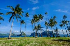 Kokospalmer på den Coron ön, Filippinerna fotografering för bildbyråer