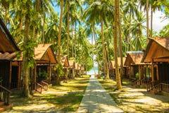 Kokospalmer på den Havelock ön Arkivbilder