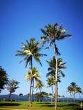 Kokospalmerna och den blåa himlen över arkivbild