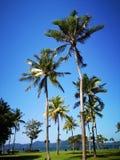 Kokospalmerna och den blåa himlen över royaltyfri bild