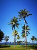 Kokospalmerna och den blåa himlen över royaltyfria bilder