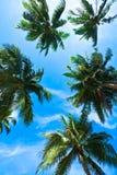Kokospalmhoofden op blauwe hemel Royalty-vrije Stock Foto's