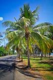 Kokospalmkoloni Royaltyfri Foto