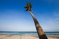 Kokospalmlutning ner till stranden på blå himmel, det blåa havet och w Royaltyfria Foton