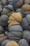 Kokosschale Stockbilder