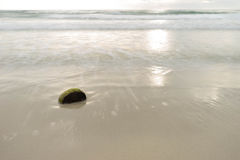 Kokosschalen auf dem Strand Stockbilder