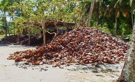 Kokosschalestapel auf den Seychellen stockfoto