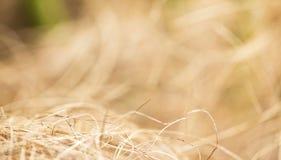 Kokosvezels, achtergrond Royalty-vrije Stock Fotografie