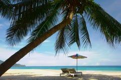 kokosy na plaży Zdjęcie Royalty Free
