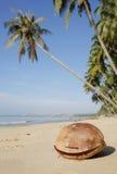 kokosy na plaży Obrazy Royalty Free