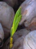 kokosy światu. Zdjęcie Stock