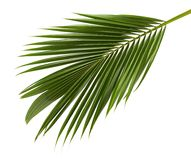 Koks liście lub Kokosowi fronds, Zielony plama opuszczają na białym tle z ścinek ścieżką, Tropikalny ulistnienie odizolowywający Fotografia Royalty Free